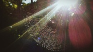 """""""Sorry we're not home right now, we're walking through/around the spider webs, so leave a message...."""""""