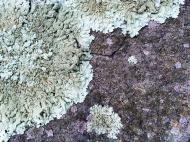 moonscape lichen!